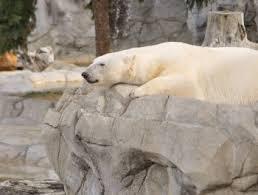 Massage Polarbär