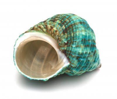 Glacial Shell1